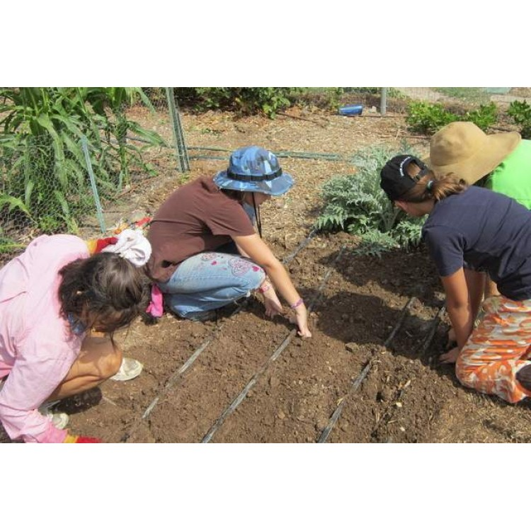 The Junior Gardeners Kit