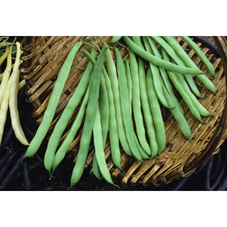 Kentucky Wonder Pole Beans