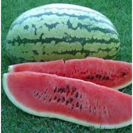 Klondike Blue Ribbon Striped Watermelon