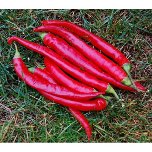 Large Thick Cayenne