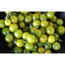 Seedling Lime Green Salad Tomato
