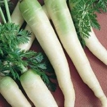 Lunar White Carrot