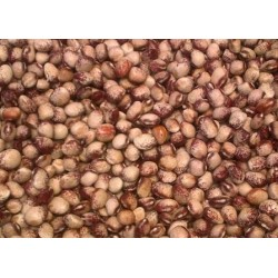 Mayflower Bean