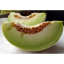 Seedling Tam Dew Melon