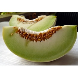 Tam Dew melon