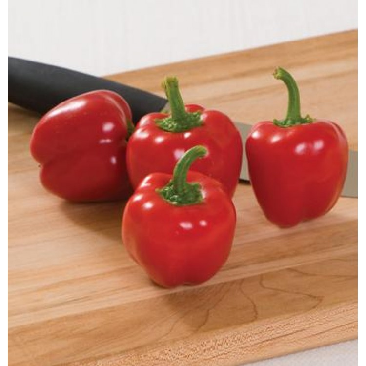 Mini Red Belle Pepper