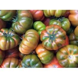 Muchameil Tomato