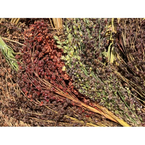 Multicoloured Broom Corn