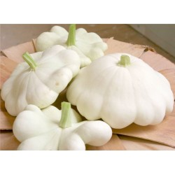 Patty Pan Alba