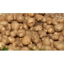 BP1 Seed Potatoes 4.5 kgs