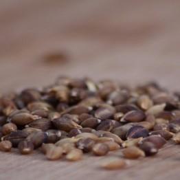Hulless Purple Barley