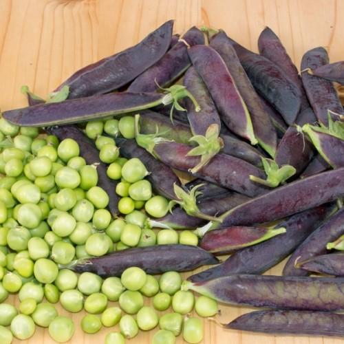 Purple Podded Shelling Pea