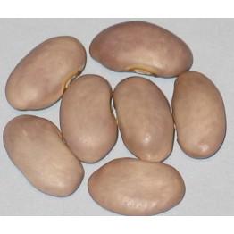 Purple Champion Pole Beans