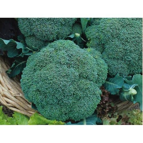 Broccoli Sweet-Stem (Medium)