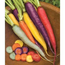 Rainbow Carrot Blend