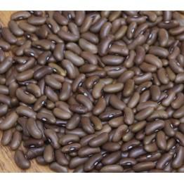 Redland Pioneer Bush Bean