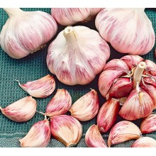 Heirloom Garlic Rose de Lautrec