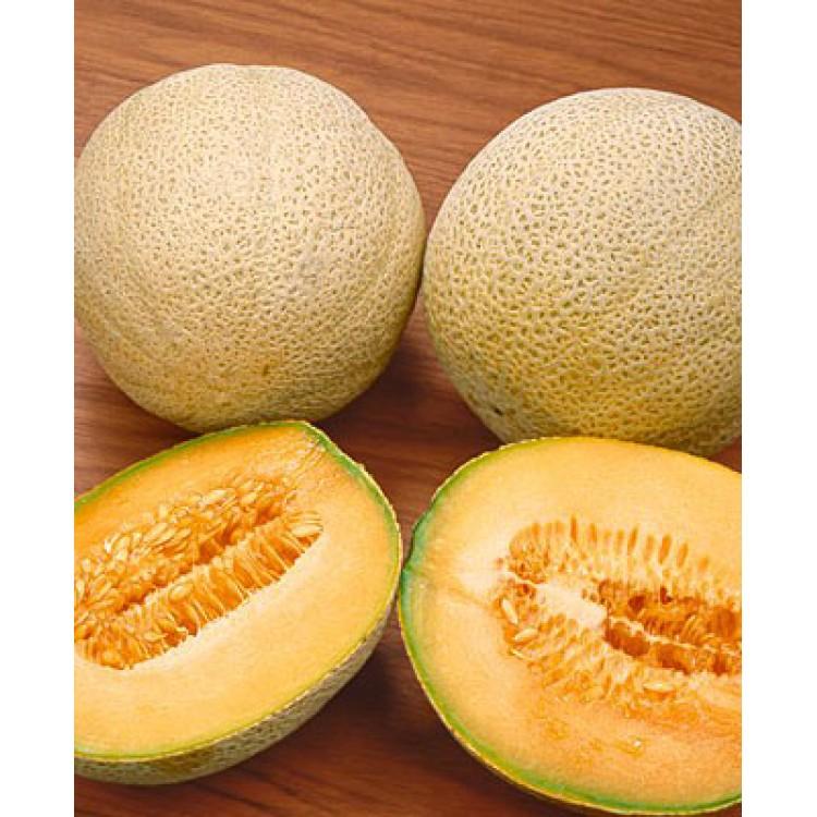 Spanspek Melon (Hales best)