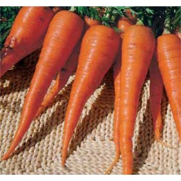 St Valery Carrot