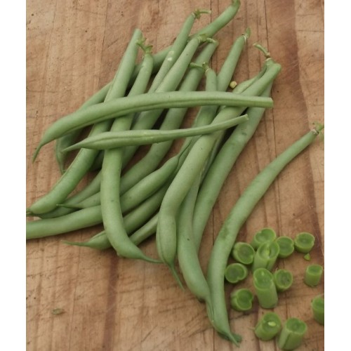 Strike Bush Bean