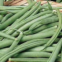 Tendergreen Bush Beans