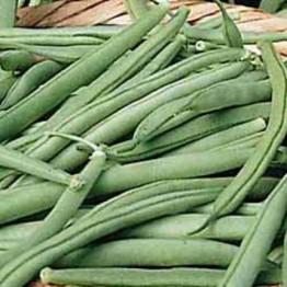 Tendergreen Bush Beans