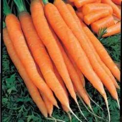 Tendersweet Carrots