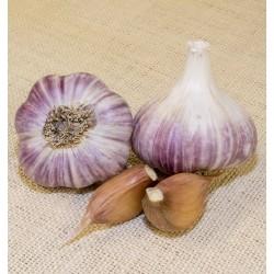 Heirloom Garlic Wengers Red Russian