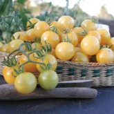 White / Yellow Tomatoes