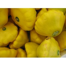 Yellow Scallop Squash